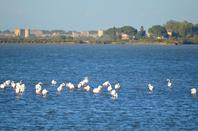 Des flamants roses à Aigues Mortes en photos (1/3)