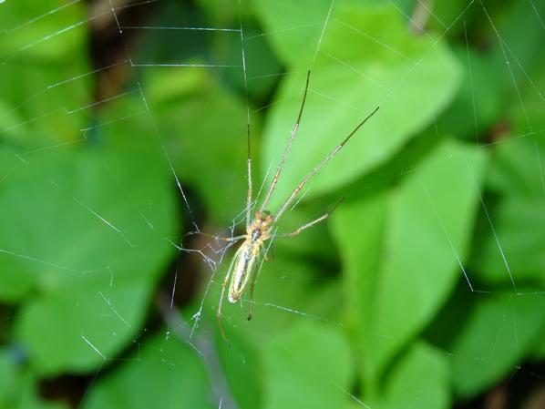 Une araignée au bord de Seine