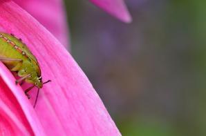 Des insectes à Giverny