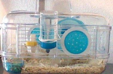 La cage a pupuce