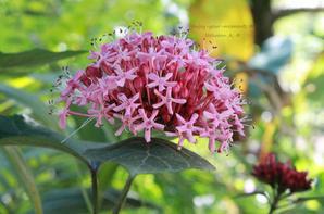 Jardin des Fleurs ☼