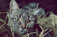 Le ronronnement est le sourire du chat ©