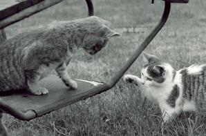Le chat ronronne le présent.