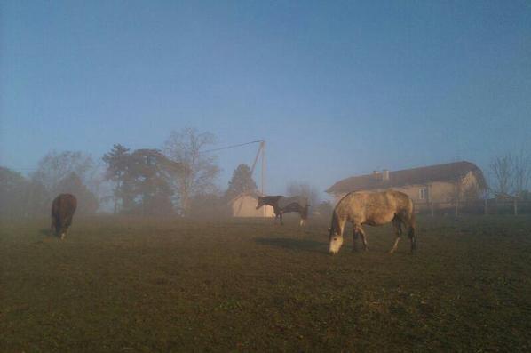 Les poneys vont bien