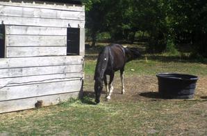 Toujours à Brion dans le ranch ou je suis allé faire mon stage quand j'étais en formation en2005