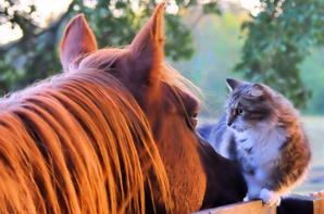 Les chevaux une passion