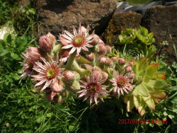 mes chouchous fleurissent!!!