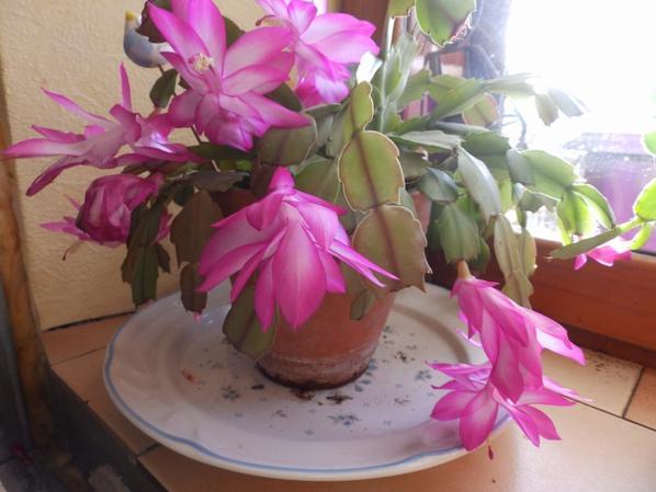 deuxième floraison