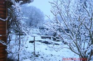 jardin sous la neige ce matin
