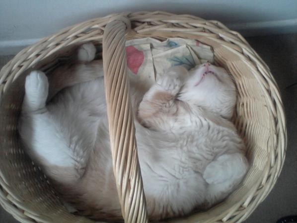 Zazou qui dort tranquillement