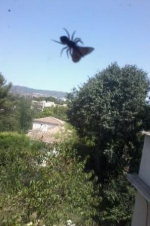 Araignée mangeant une mite