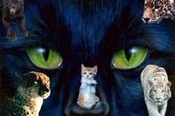 Les felins (l)