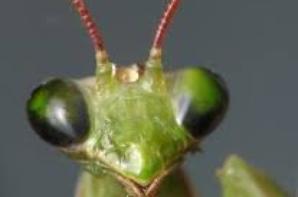 Les insectes !