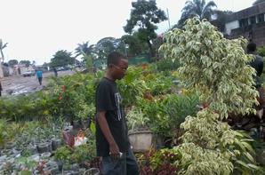 ma pepiniere de fleur