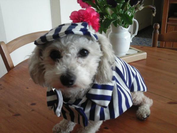 pour votre toutou le manteau marin et la casquette pour la chaleur de l'été