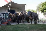 2017 Reims cirque A . Gruss +ZOO