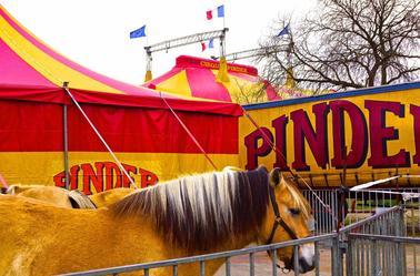 Pinder est à Paris .