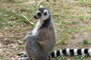 Zoo d'Arcachon