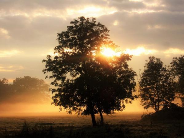 Matin brumeux et Soleil automnal....