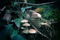 Les champignons des nos bois...