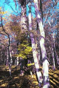 Automne dans les bois....
