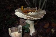 Bagasse....nos bois....et le sol riche en champignons....
