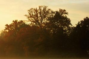 Matin....le champ au Soleil d'automne...