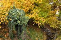 En ville.....l'automne est bien joli...