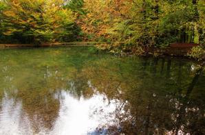 Un étang cristalline dans la forêt suisse...