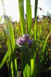 Le champ et ses couleurs automnales....