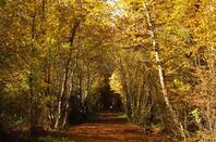 Promenade dans les bois....Bagasse, bois de Ferney-Voltaire....