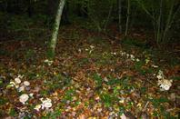 Les monde des champis...dans les bois...