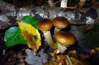 Sol des bois......automne pluvieux....