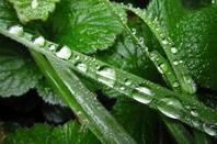 La pluie automnale....