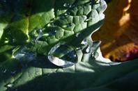 L'eau....et les plantes...