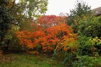 La ville est  décore....automne est bien la....