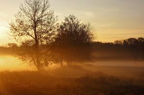 Soleil et la brume matinale...