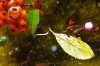 Automne...l'eau et la nature (je dire) morte....