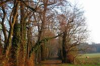 Promenade du dimanche après-midi....