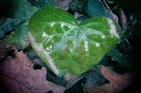 Nature automnale....et romantique....