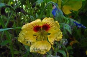 Jardin et ses couleurs automnales....