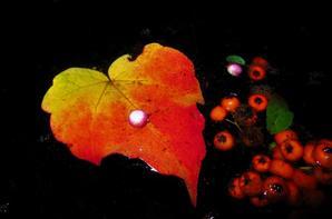 La nuit et l'eau....mes tableaux a la Verseaux....