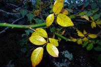 Nuit....la nuit d'automne bien coloré...