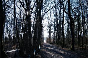 Promenade....nos bois...