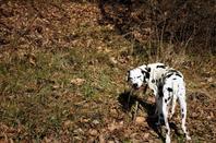 Mon Titi.....dans les bois....