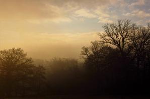 Soleil hivernal....matin est, doré...