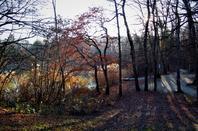 Au bord de l'étang....