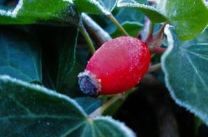 Nature du matin....l'hiver...