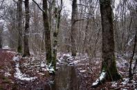 Au bord  de la petite forêt..la piste...