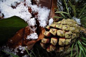 Les bois....les bois sont, enneigé...